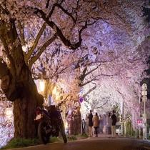 【 周辺情報 】一目千本桜(大河原町)