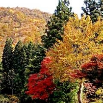 大湯温泉の紅葉錦の彩り