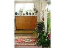 =玄関=色んな観葉植物がお出迎えします。