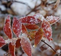 季節の移ろい秋から冬へ