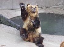 カドリードミニオン 熊のおやつ