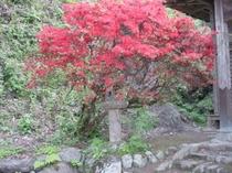 鹿島神社のさつき