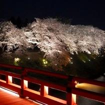 ★鶴ヶ城ライトアップ★桜の時期はライトアップも楽しめる。お堀をぐるりと囲む桜も見もの