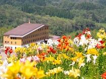 夏期ゆり園からホテルを望む