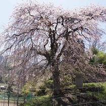 *周辺景観(春)