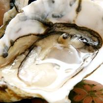 生牡蠣素材