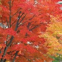 日本三大名園【岡山後楽園】ほか紅葉の名所めぐりの拠点は当館に♪