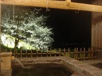 夜桜 露天