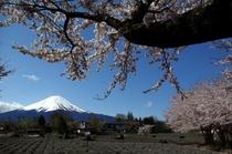富士と八木崎公園