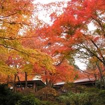 *施設外観(秋)毎年秋には、赤・黄色に色づいた見事な紅葉がご覧いただけます。