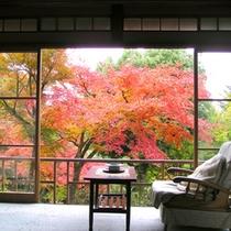 *【紅葉】本館1階「木立」秋は庭園の木々が色鮮やかに染まり、何とも言えない美しさです。