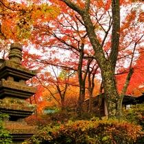 *紅葉に染まったお庭から錦華亭を臨む