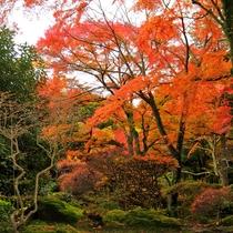 *本館から露天風呂へと続く道すがら…、紅葉の赤の鮮やかな色あいを臨めます。