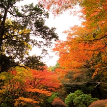 *年によって紅葉のいろづき方は様々。紅葉狩をお考えのお客様は是非一度当館にご来館くださいませ。