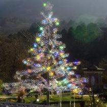 *箱根ガラスの森美術館 Xmasシーズンはツリー型のクリスタル達が彩られます。
