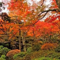 *一歩お庭に出ると紅葉の海にダイビングした気分に。