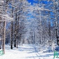晴天率80%!白樺国際スキー場のクロカン&チャレンジコースでは存分に自然雪をお楽しみください。