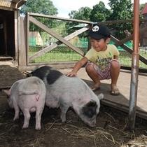 牧場豚&子供