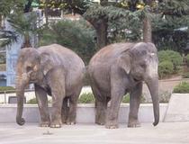 かみね動物園