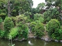 中庭「池」