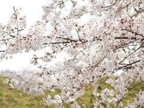 伊豆の春を満喫♪