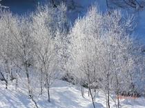 冬の風景 木