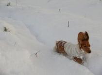 冬の風景 犬