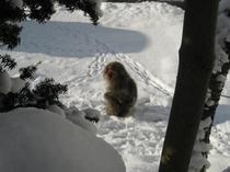 冬の風景 猿