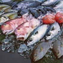 【地産地消】前獲れの新鮮魚介