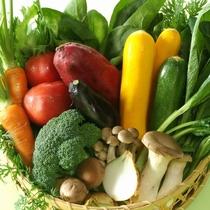【地産地消】契約農家こだわり野菜