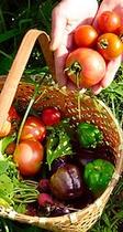 畑の朝採り野菜