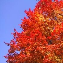 【紅葉】秋空に映える紅葉は、ホテルの周りでも見ることができます。