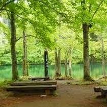 【ドッコ沼】蔵王山中腹にあるドッコ沼。夏は絶好の避暑地となる、水の澄んだ美しい沼です。