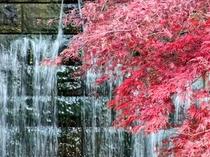 日本庭園(秋)