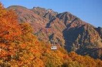 八海山 紅葉