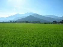 春 田園風景