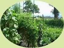 自家製 特選野菜畑