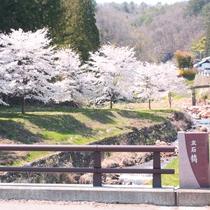 春は道路沿いの桜が皆さんをお出迎え