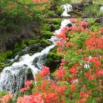 【チャツボミゴケ公園】強酸性の水中で生息するチャツボミゴケの群生地として県の文化遺産に