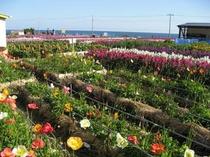 白浜 花畑1