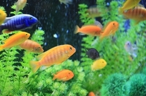 mg 魚4