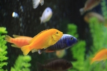 mg 魚2