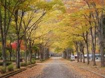 秋には見事なケヤキ並木を楽しめます。