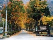 当館への並木道