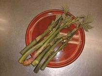 ⑭山ウド 天ぷら、煮物にも良し 香りがあって山菜では最高!(5月中旬から6月下旬)