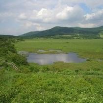 8月の八島湿原(250X250)