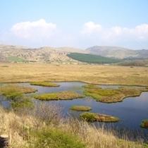6月の八島湿原(250X250)