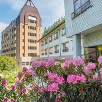 西館・別館と石楠花