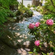 本館玄関横の庭園石段と石楠花