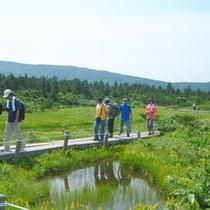 【中央高原トレッキング】高山植物や湖沼群を眺めトレッキング